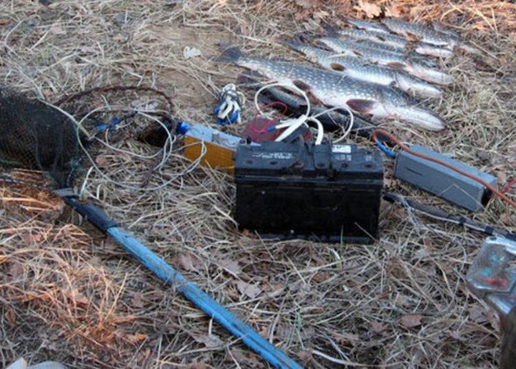 Электрические удочки и рыба