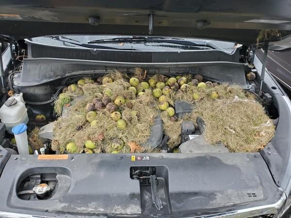 Запасы белок под капотом авто