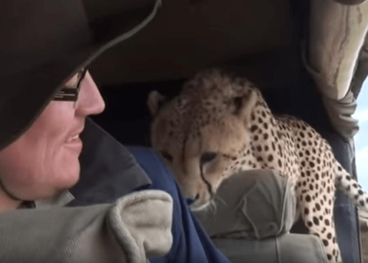 Гепард в салоне авто