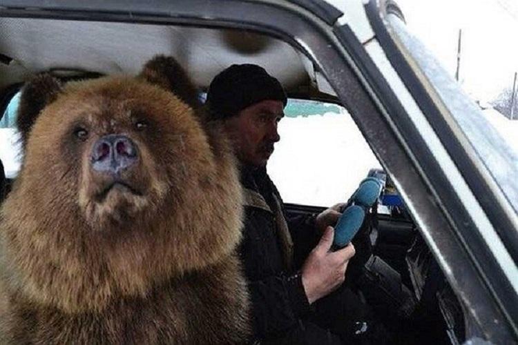 Медведь возле водителя