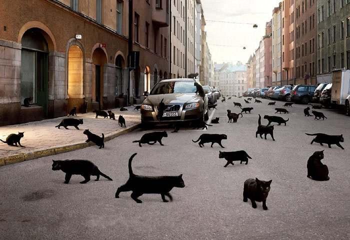 Черные коты на дороге
