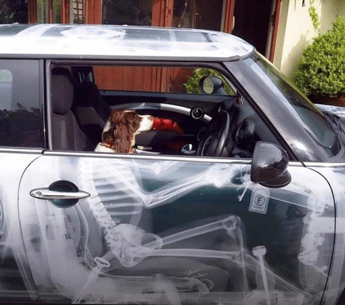 Собака за рулем и аэрография скелет