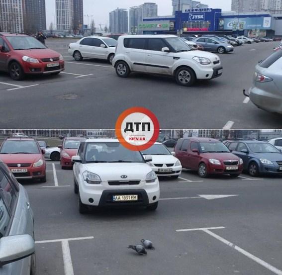 Парковка с авто и голуби