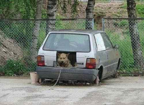 Будка собаки в машине