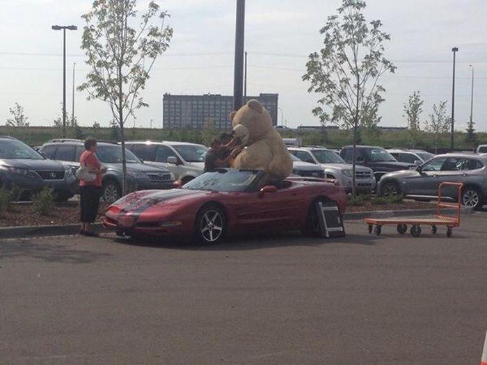 Игрушечный медведь в Chevy Corvette