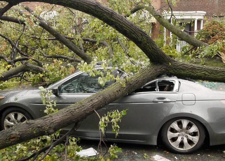 Дерево придавило авто