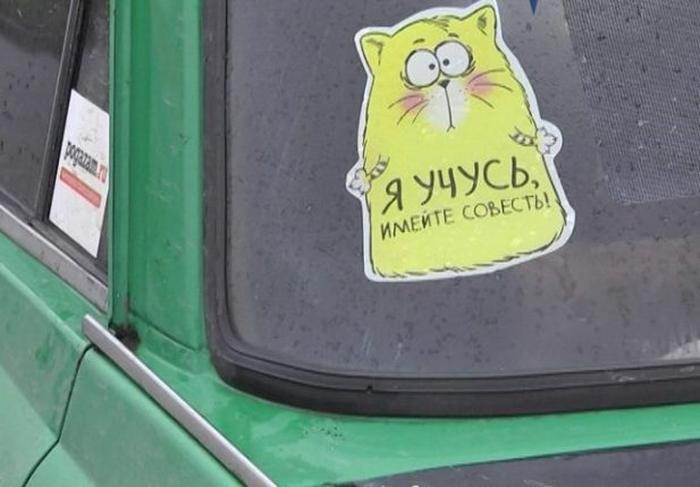 Наклейка кота на машине Я учусь