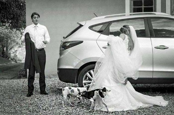Собаки подняли лапу на невесту
