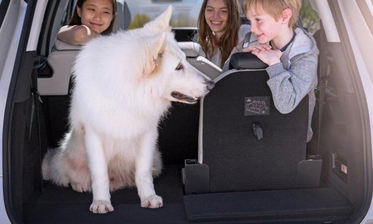 В машине собака и дети