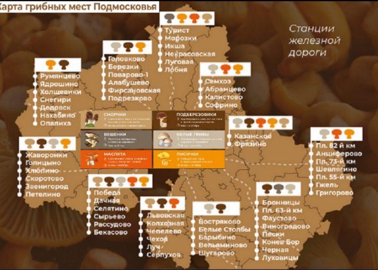 Виды грибов и маршруты в Подмосковье